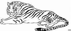Malvorlagen Gratis Tiger Tiger Liegt Ausmalbild Malvorlage Tiere