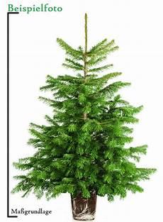 Weihnachtsbaum Im Topf Kaufen Anwachsf 228 Hig