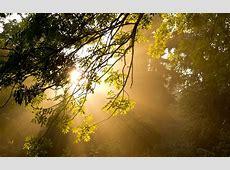 nice Good Morning Sunshine Wallpaper   Nature Wallpaper