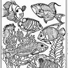 Ausmalbilder Erwachsene Fische Fische Ausmalbilder F 252 R Erwachsene Kostenlos Zum Ausdrucken