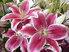 fiori bulbo fiori da bulbo bulbi piante bulbose