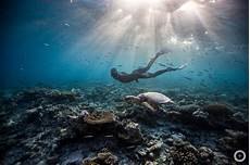 meet the freediving couple who make stunning underwater photos with no scuba gear