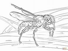 realistic european wasp coloring page free printable