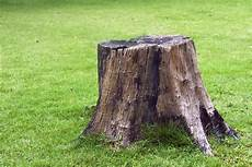 3 Reasons To That Tree Stump Removed Nelson