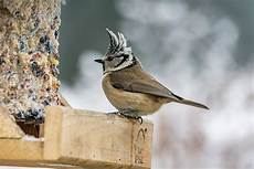 einheimische vögel im winter v 246 gel im winter f 252 ttern wichtig und richtig lebe liebe
