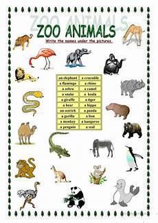 zoo animals worksheet free esl printable worksheets made