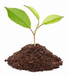 Pflaumenbaum Aus Kern Ziehen 187 So Geht S