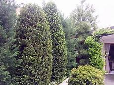 allestimento terrazzi allestimento terrazzi idea verde