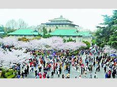 武汉大学邀请医护人员赏樱