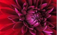Flower Wallpaper For Windows by Official Windows 7 Wallpapers Wparena