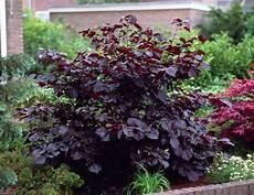 pflanze rote blüte gartenstr 228 ucher mit roten bl 228 ttern 18 sch 246 ne arten als