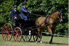 carrozze per cavalli usate foto carrozze e cavalli in cittadella 1 di 13 parma