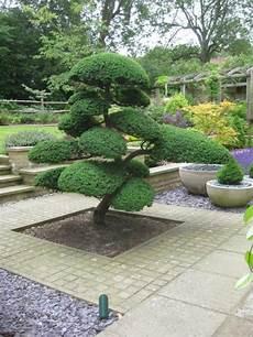 Arbre Niwaki Dans Un Jardin Japonais Jardin Japonais