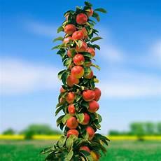Obstbäume Günstig Kaufen - apfelbaum kaufen aj99 casaramonaacademy