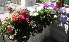 Fleurs De Mon Balcon