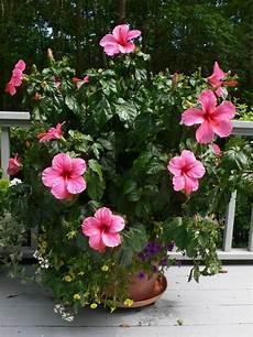 Zimmerpflanzen Bl 252 Hend Beleben Sie Ihr Zuhause