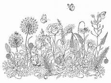 wildflowers and insects sketch stock vector illustration
