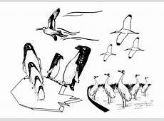 Kleurplaat zeevogels   Afb 27326.