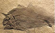the missing fossils matter as much as the ones we have