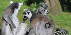 tierpark berlin gutschein gutschein tierpark str 246 hen 60 statt 120