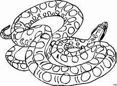 schlange gefleckt ausmalbild malvorlage tiere