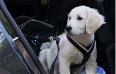 hund im auto mitnehmen 3 best harnesses for car travel in 2019 crash tested