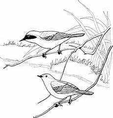 Malvorlagen Yellow Common Yellowthroat Coloring Page Free Printable