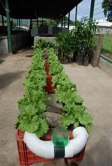 Vegetable Gardening Systems by Best 20 Vegetable Garden Design Ideas For Green Living
