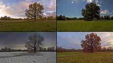 ein baum vier jahreszeiten foto bild landschaften