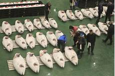 toyosu sushi meaning tuna auction in tokyo toyosu fish market guide gowithguide