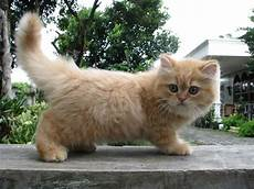 Cara Merawat Kucing Drexfiles