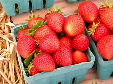 Gardening Strawberries by Free Images Plant Farm Fruit Food Produce