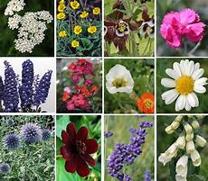 Mixed Perennial Plants For Sale Brighten Up Your