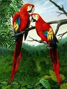 Terkeren 25 Gambar Burung Lukisan Gani Gambar