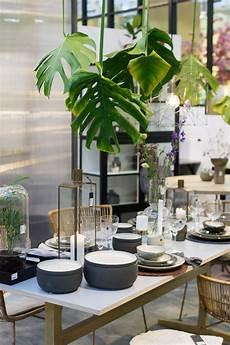 Deko Für Zuhause - jungle trend f 252 rs zuhause pflanzen deko der