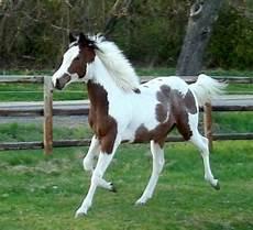 Wie Viel Geld Brauche Ich F 252 R Ein Pferd Kaufen Pferde