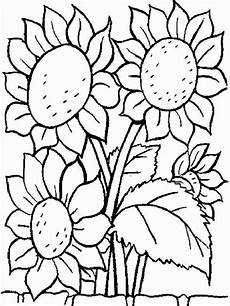 helianthus or sunflower colouring pages picolour