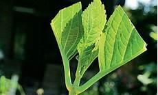 hortensie vermehren selbst de