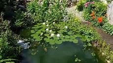 Japanischer Garten Anlegen Gestalten