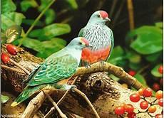 Gambar Gambar Animasi Burung Keren
