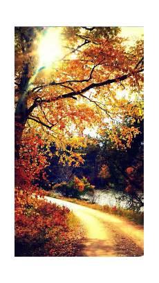Pretty Fall Wallpaper Iphone 7