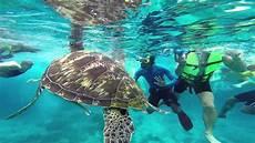 snorkeling in similan islands youtube