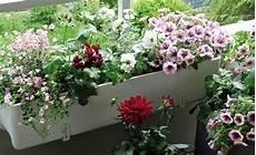 blumen für südbalkon balkonblumen richtig einpflanzen balkon blumen