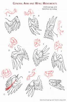 drawing tutorial arms and wings repinned by www