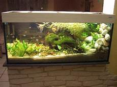 Aquarium Als Raumteiler Benutzen 26 Beispiele