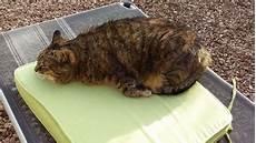 symptome schmerz bei katzen katzenverhaltensberatung