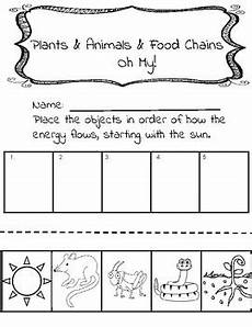 food chain worksheet by brown s bunch of brilliance tpt