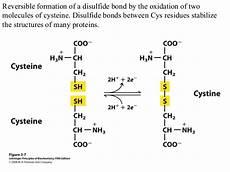 biochemistry ch3 amino acids peptides protein