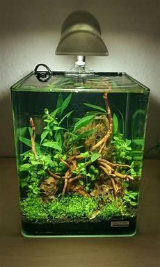 nano cube 10l aquarscape fish are friends aquarium