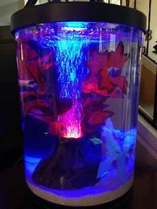 newbie neon tetras lighting feeding my aquarium club